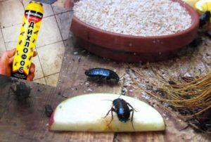 Как избавиться от появившихся тараканов? Народные способы или вызов специалиста? Инструкции