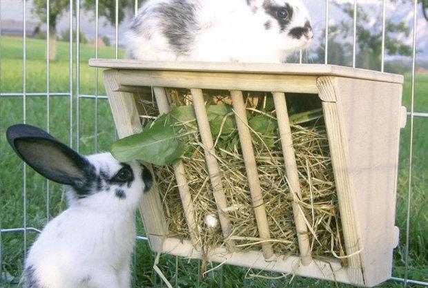 Какие выбрать  кормушки для кроликов